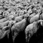 Klonowanie wymarłych gatunków zwierząt