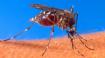 Wciąż wiemy zbyt mało o wirusie Zika
