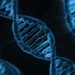 Trójwymiarowa struktura katalitycznego DNA